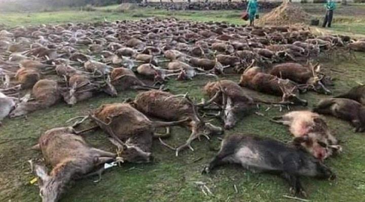 des-chasseurs-massacrent-540-animaux-au-portugal-et-creent-lindignation
