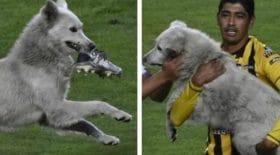 chien-chaussures-football