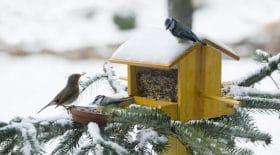 conseils nourrir oiseaux hiver