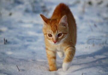 est-ce-que-mon-chat-craint-le-froid