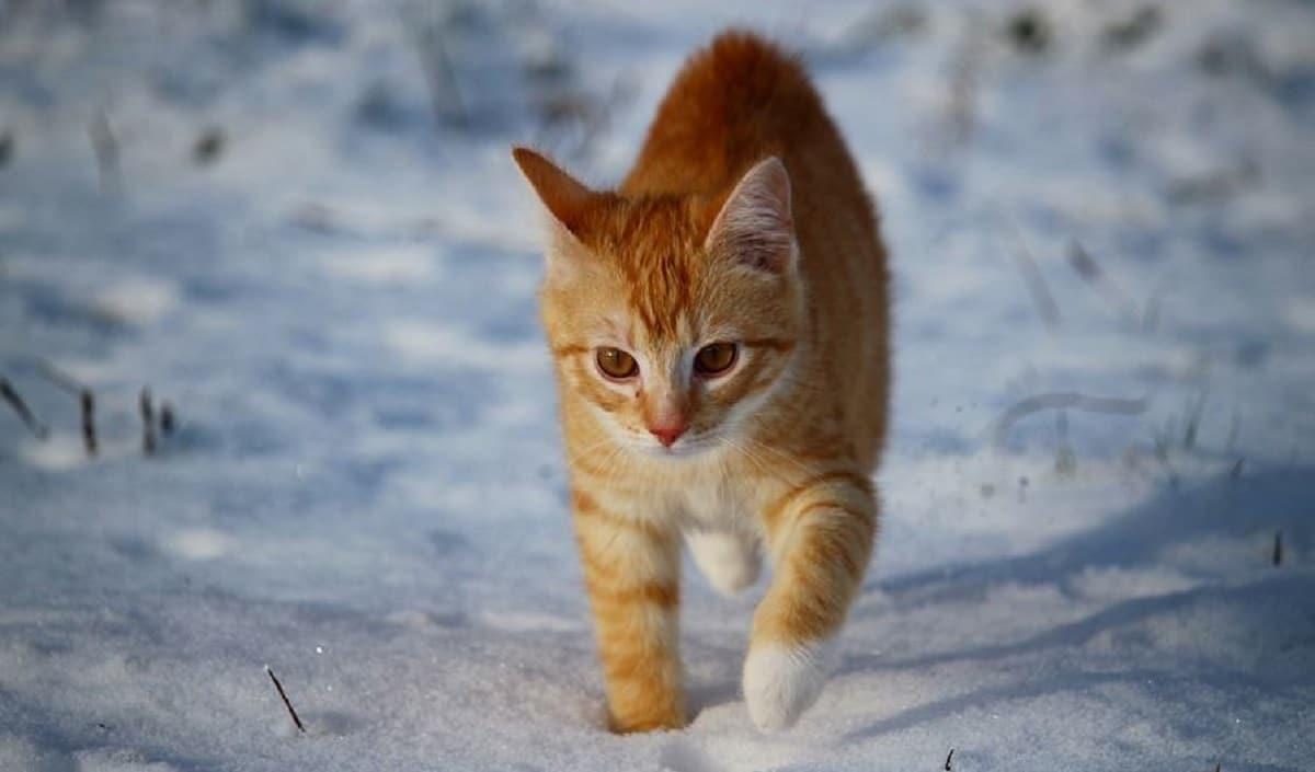 Est-ce que mon chat craint le froid en hiver ?