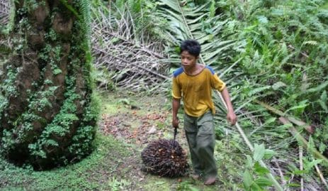 huile-de-palme-un-nouveau-scandale-eclate-autour-du-travailforce-enfants