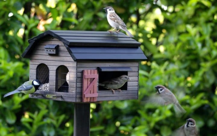 mangeoire oiseaux lidl