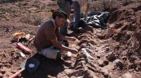 le plus grand dinosaure au monde a été découvert