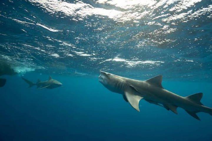 requin ressemble donald trump