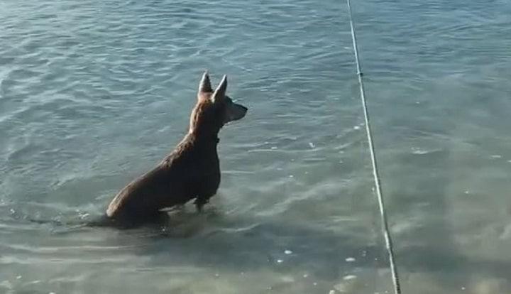 un-chien-attaque-un-requin-qui-sapproche-un-peu-trop-maitre