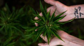 cannabis doubs enfant 12 ans
