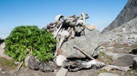Lac aux squelettes