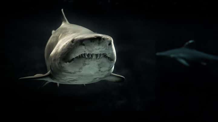 Un requin aux yeux rouges et brillants