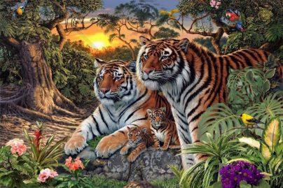 enigme tigres
