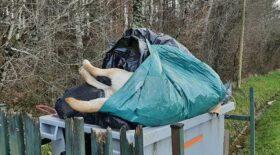 chien poubelle