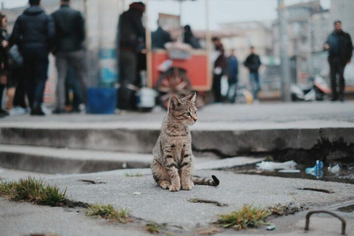 GPS chat chine marché maltraitance animale