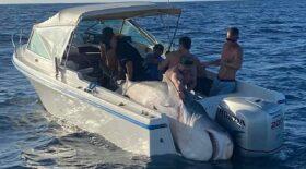 requin sydney capturé