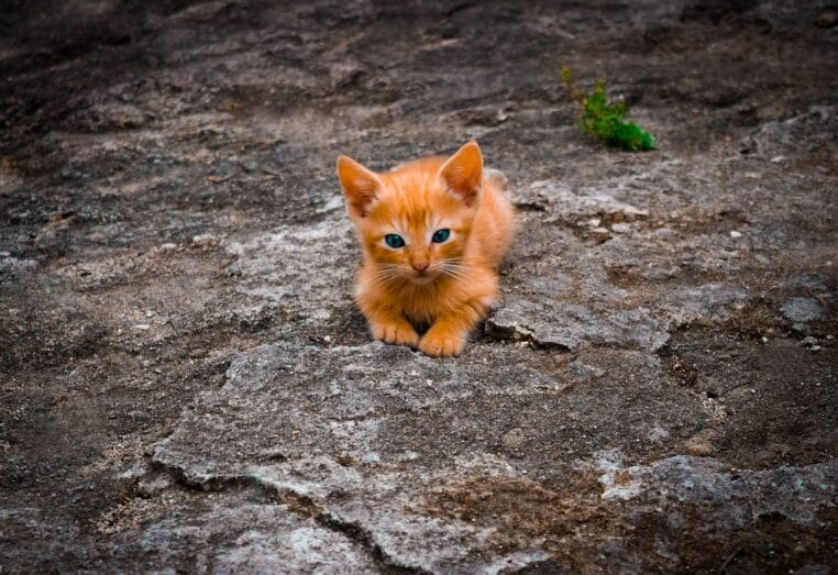 Je viens d'euthanasier 4 chatons. Stérilisez vos animaux bordel