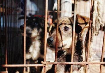 Adoption pour 350 animaux