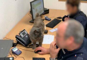 Ce chat est devenu la mascotte du commissariat, mais aussi une star d'Instagram