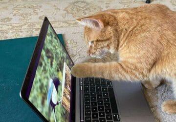 un chat s'invite pour regarder des vidéos d'oiseaux