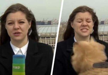 chien vole micro présentatrice météo