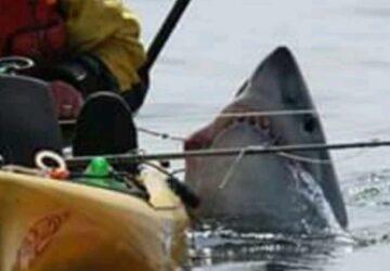 requin pêcheur kayak