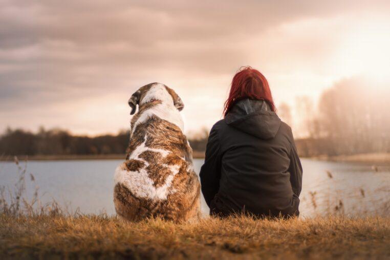 Un chien sauve la vie d'une femme qui est sur le point de se suicider