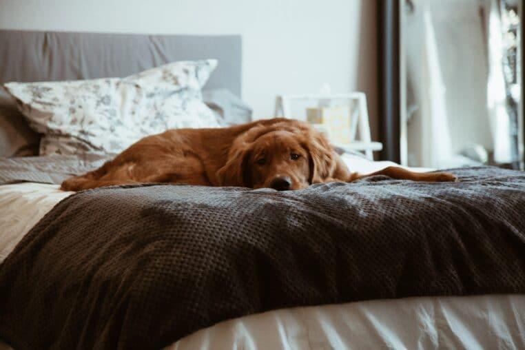 animal de compagnie dormir pas bonne idee