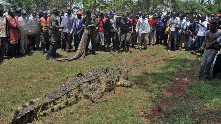 crocodile oussama ben laden a tué 80 personnes