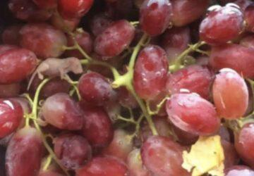 fœtus de souris dans une grappe de raisin
