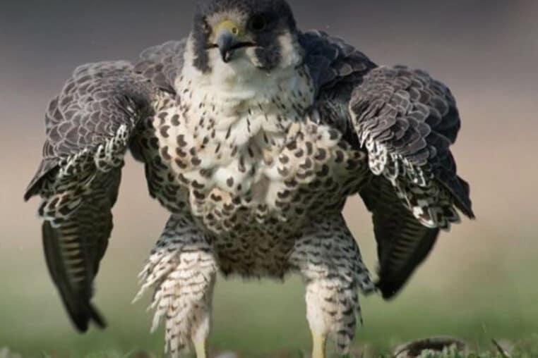 oiseau hulk photo inde