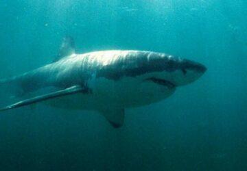 requin-attaque-enfant