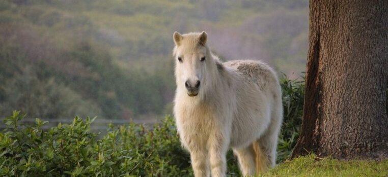 retraite amende viol poney
