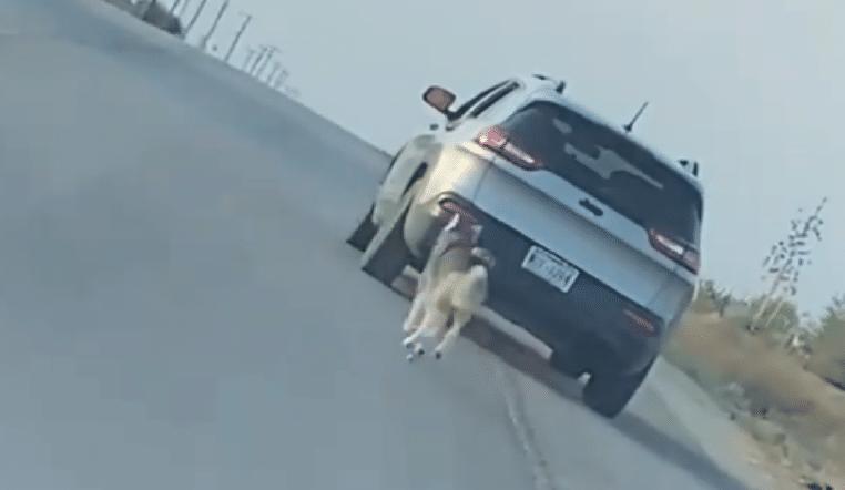 Vidéo : Un husky court après la voiture de son maître qui vient de l'abandonner !