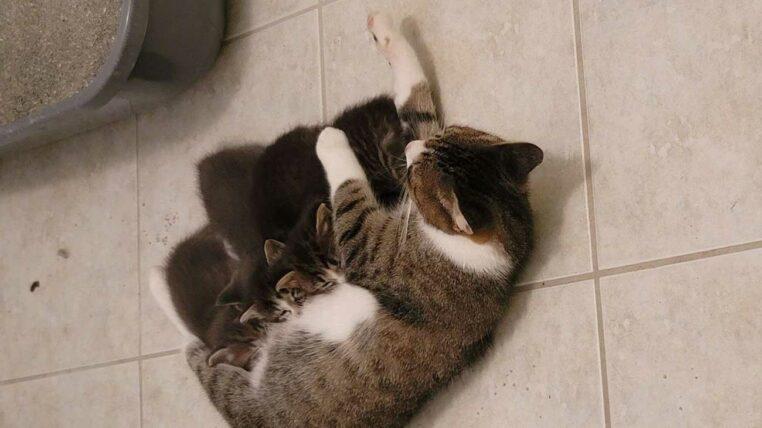 famille de chats s'installe dans son garage