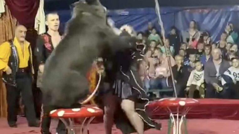 un ours dans un accoutrement ridicule attaque dans un cirque