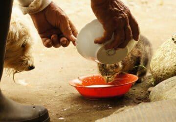 Afghanistan Le Royaume-Unis désire évacuer des chats et des chiens de Kaboul