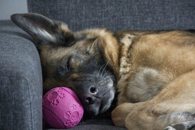 Les femmes dorment mieux à côté d'un chien que d'un homme