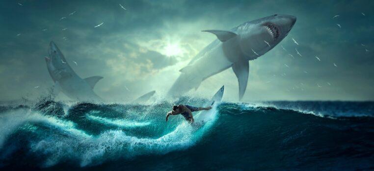 Un australien d'une vingtaine d'années décède après avoir été attaqué par un requin