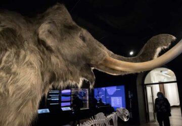 des scientifiques veulent donner vie aux mammouths