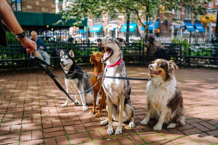 top-races-chiens-preferes-français