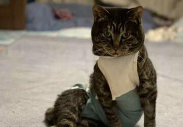un chat poseur ressemble à un mannequin