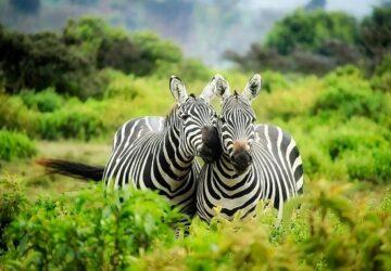 homosexualite animaux