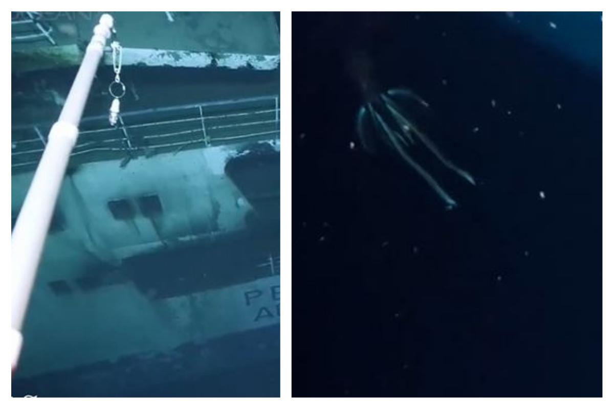 Des chercheurs filment «une énorme créature» à plus de 800 mètres de profondeur dans la mer rouge (vidéo)